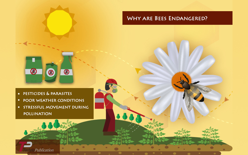 Bees Becoming Endangered