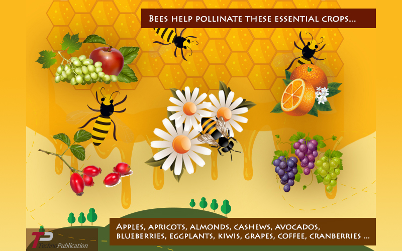 Bees Help Polinate